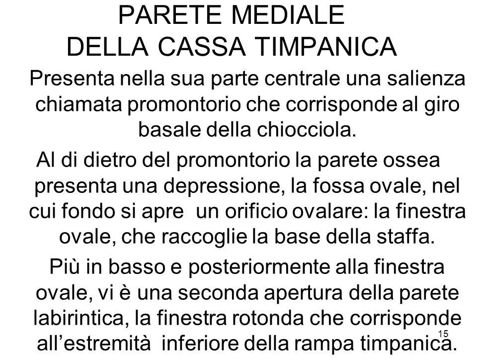PARETE MEDIALE DELLA CASSA TIMPANICA