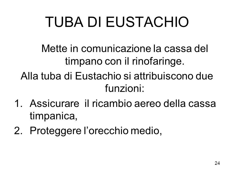 TUBA DI EUSTACHIO Mette in comunicazione la cassa del timpano con il rinofaringe. Alla tuba di Eustachio si attribuiscono due funzioni: