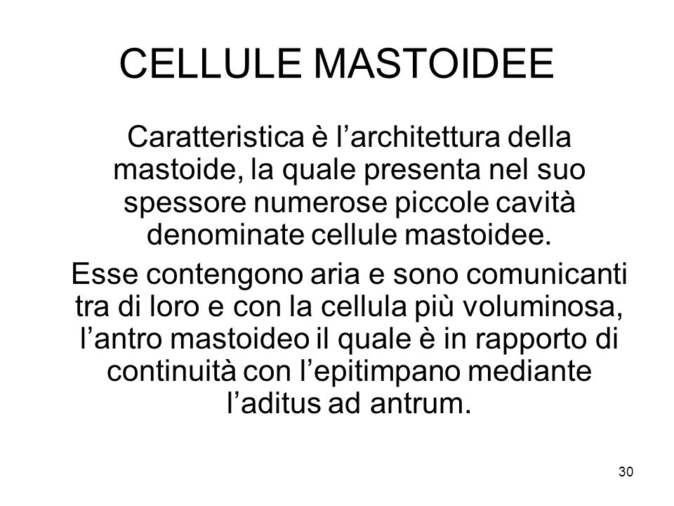 CELLULE MASTOIDEE