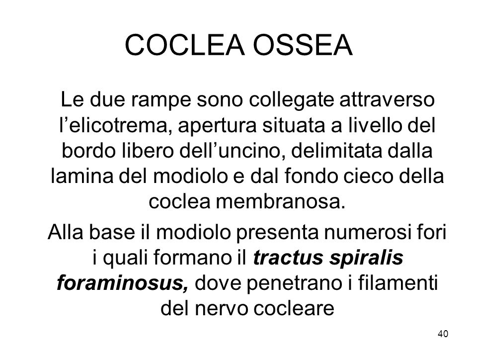 COCLEA OSSEA