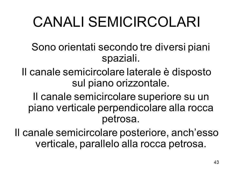 CANALI SEMICIRCOLARI Sono orientati secondo tre diversi piani spaziali. Il canale semicircolare laterale è disposto sul piano orizzontale.