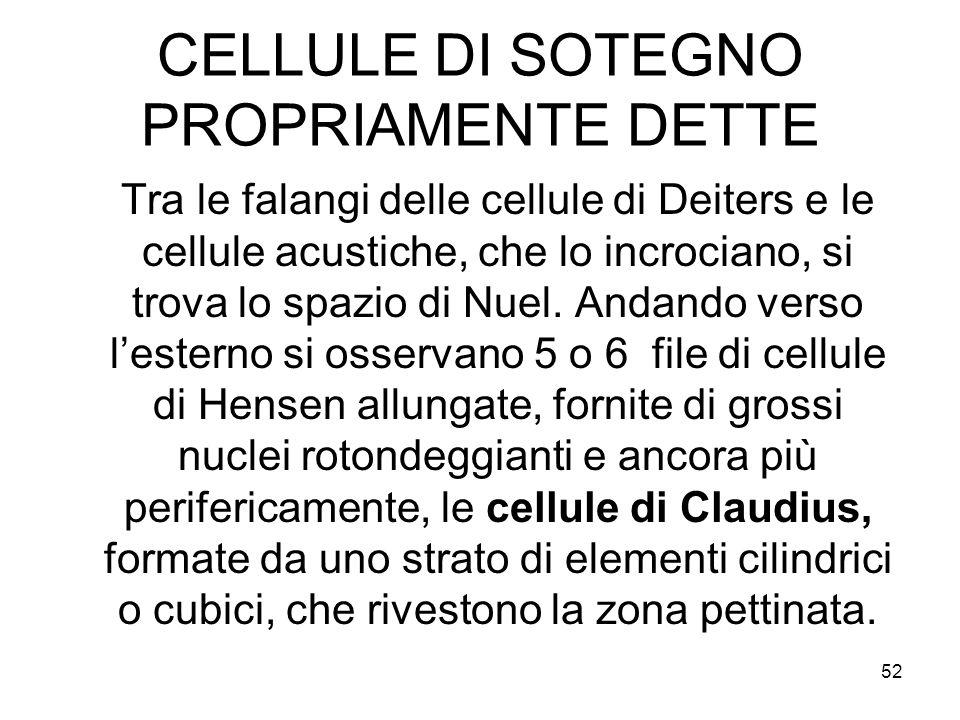 CELLULE DI SOTEGNO PROPRIAMENTE DETTE