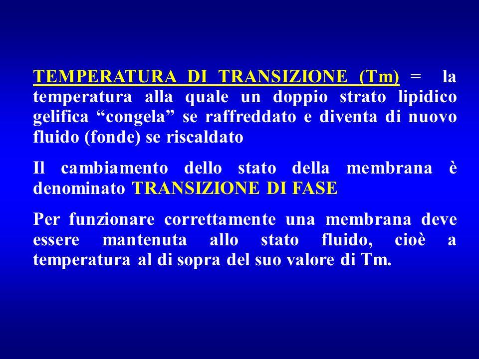TEMPERATURA DI TRANSIZIONE (Tm) = la temperatura alla quale un doppio strato lipidico gelifica congela se raffreddato e diventa di nuovo fluido (fonde) se riscaldato