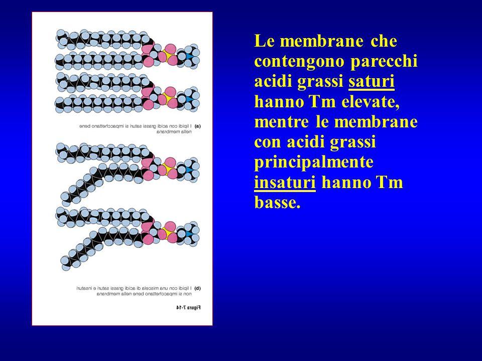 Le membrane che contengono parecchi acidi grassi saturi hanno Tm elevate, mentre le membrane con acidi grassi principalmente insaturi hanno Tm basse.