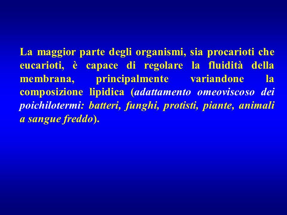 La maggior parte degli organismi, sia procarioti che eucarioti, è capace di regolare la fluidità della membrana, principalmente variandone la composizione lipidica (adattamento omeoviscoso dei poichilotermi: batteri, funghi, protisti, piante, animali a sangue freddo).