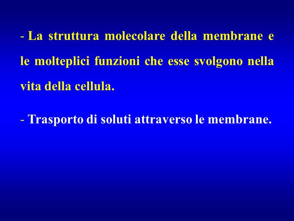 La struttura molecolare della membrane e le molteplici funzioni che esse svolgono nella vita della cellula.