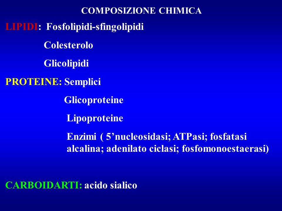 LIPIDI: Fosfolipidi-sfingolipidi Colesterolo Glicolipidi
