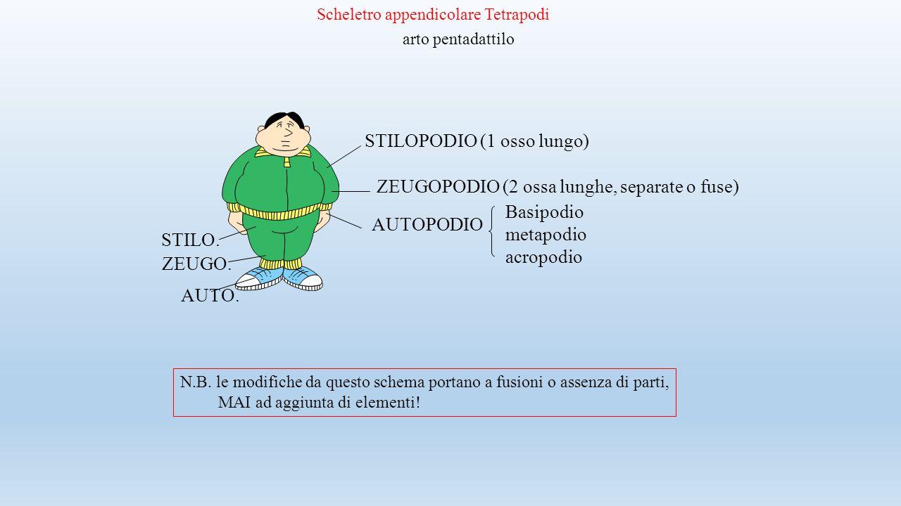 STILOPODIO (1 osso lungo)
