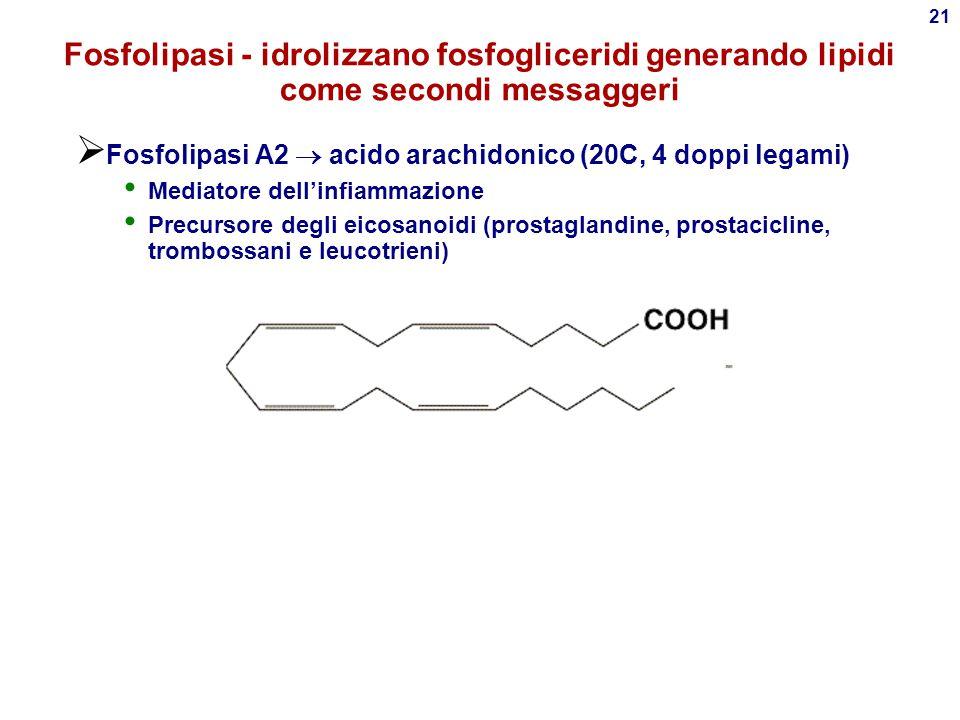 Fosfolipasi - idrolizzano fosfogliceridi generando lipidi come secondi messaggeri