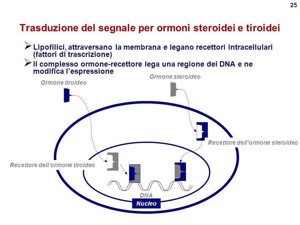 Trasduzione del segnale per ormoni steroidei e tiroidei