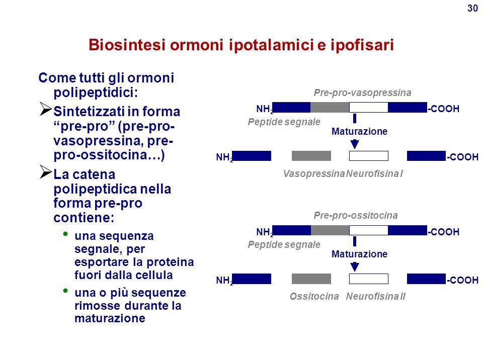 Biosintesi ormoni ipotalamici e ipofisari