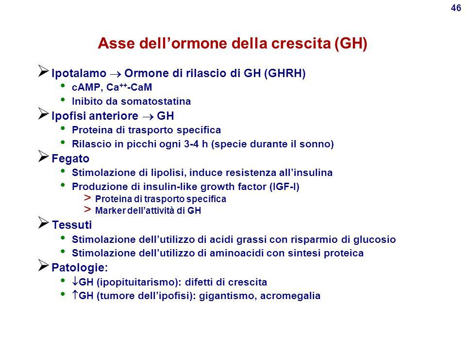 Asse dell'ormone della crescita (GH)
