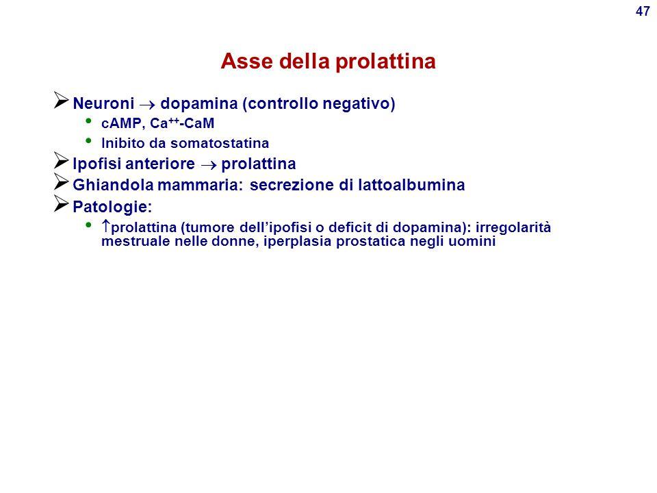 Asse della prolattina Neuroni  dopamina (controllo negativo)