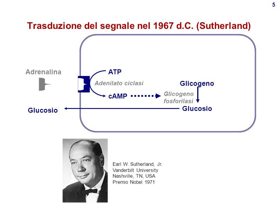Trasduzione del segnale nel 1967 d.C. (Sutherland)