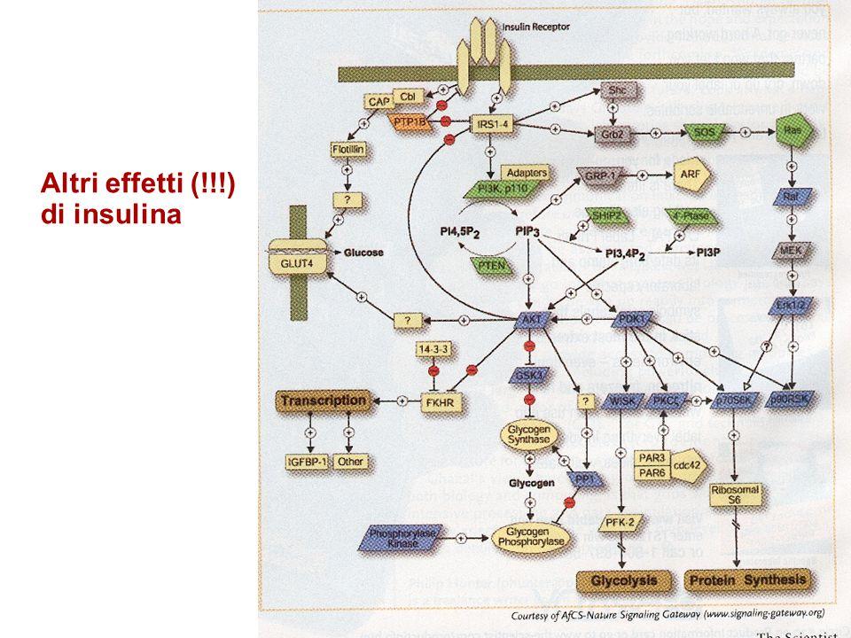 Altri effetti (!!!) di insulina