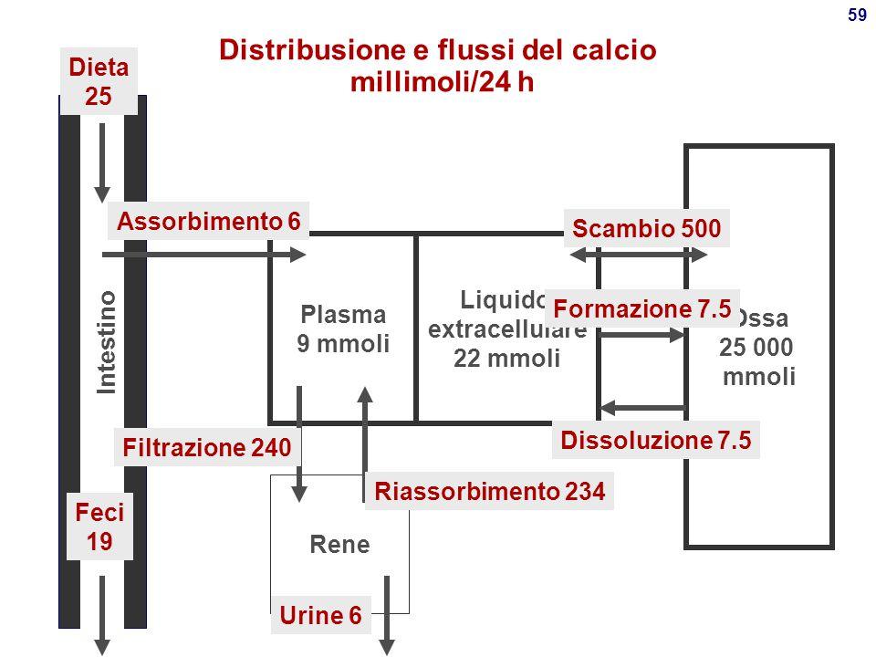 Distribusione e flussi del calcio millimoli/24 h