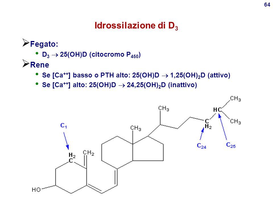 Idrossilazione di D3 Fegato: Rene D3  25(OH)D (citocromo P450)