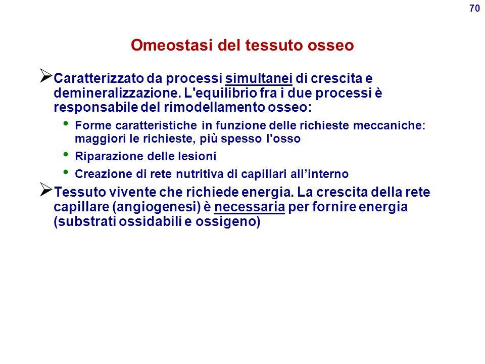 Omeostasi del tessuto osseo