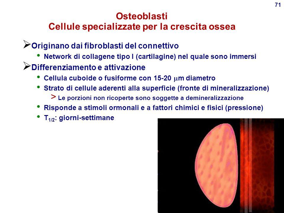 Osteoblasti Cellule specializzate per la crescita ossea