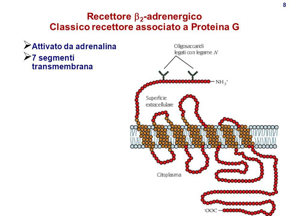 Recettore 2-adrenergico Classico recettore associato a Proteina G