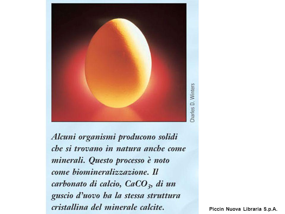 Alcuni organismi producono solidi che si trovano in natura anche come minerali.