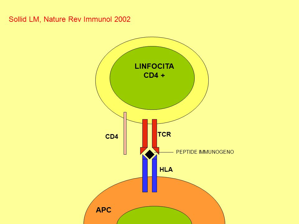 Sollid LM, Nature Rev Immunol 2002