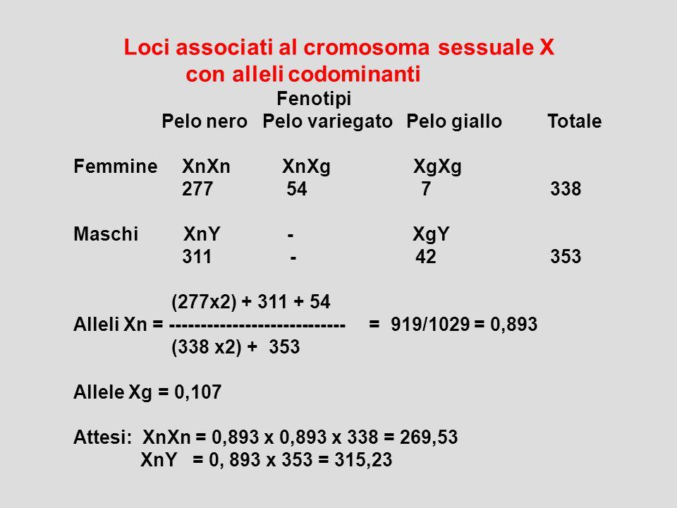 Loci associati al cromosoma sessuale X con alleli codominanti