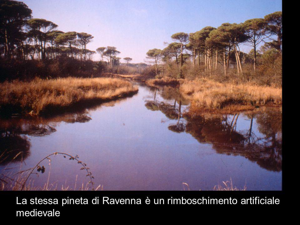 La stessa pineta di Ravenna è un rimboschimento artificiale medievale