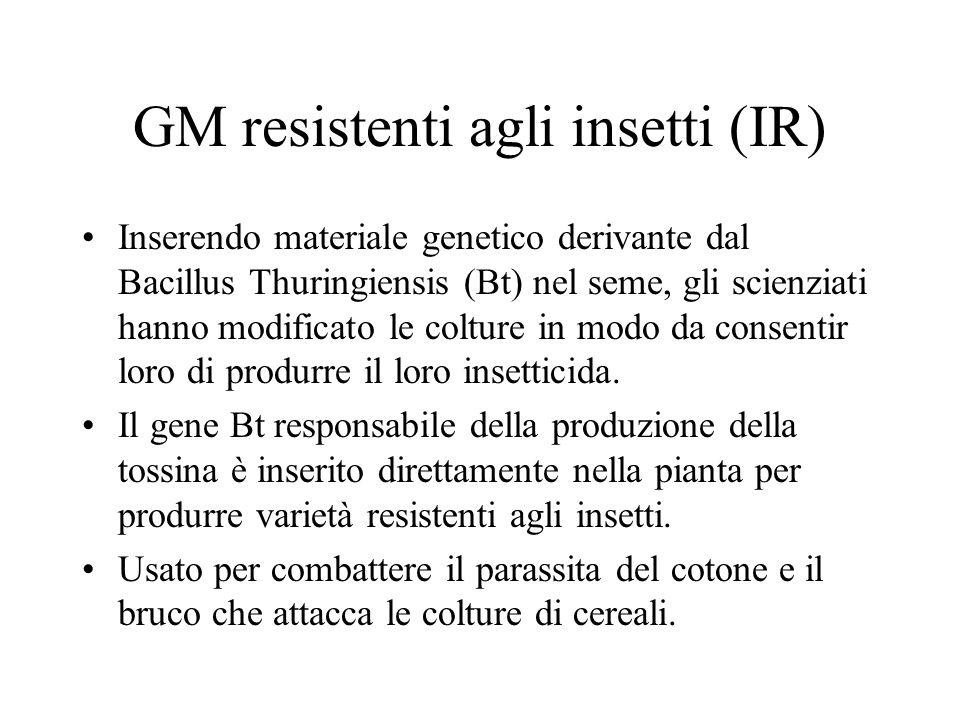 GM resistenti agli insetti (IR)