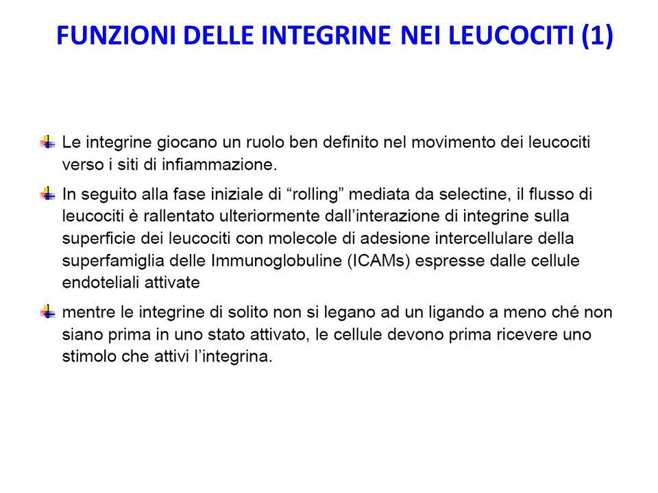 FUNZIONI DELLE INTEGRINE NEI LEUCOCITI (1)