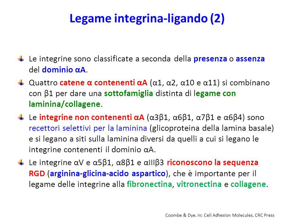 Legame integrina-ligando (2)