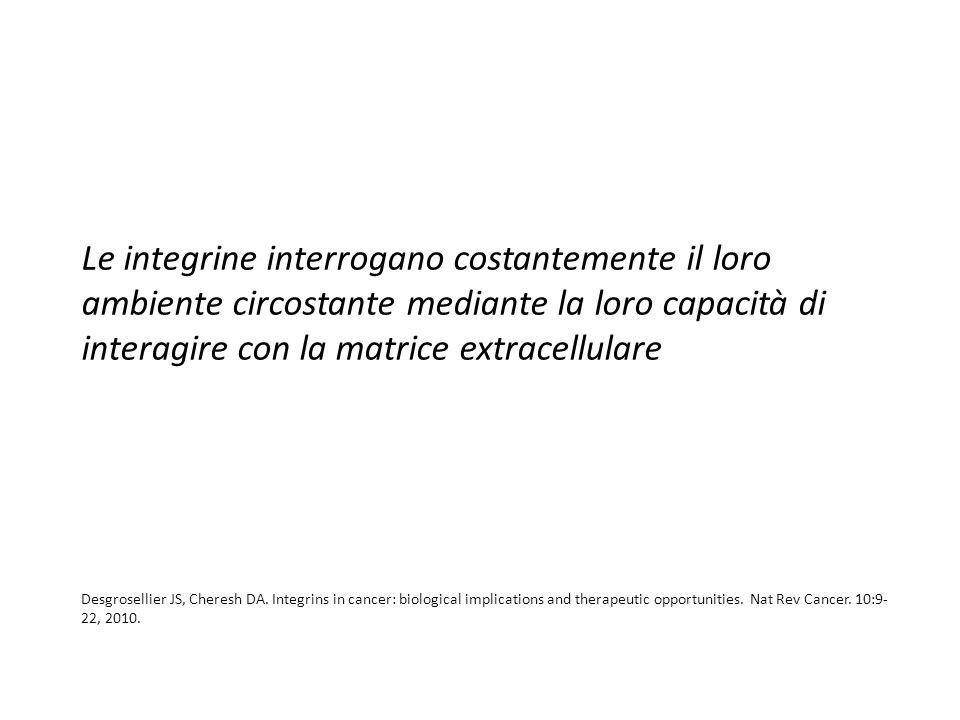Le integrine interrogano costantemente il loro ambiente circostante mediante la loro capacità di interagire con la matrice extracellulare
