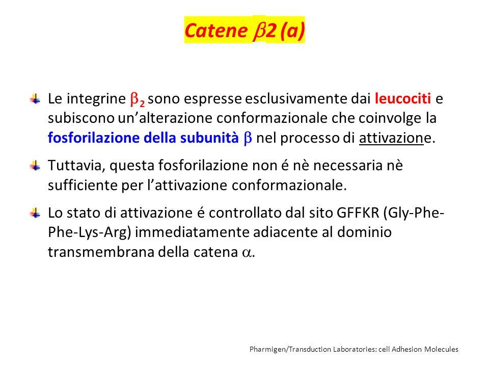 Catene 2 (a)