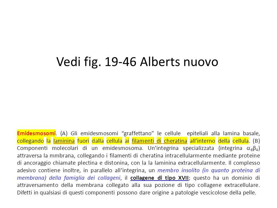 Vedi fig. 19-46 Alberts nuovo