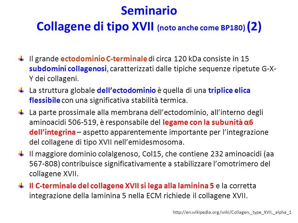 Seminario Collagene di tipo XVII (noto anche come BP180) (2)