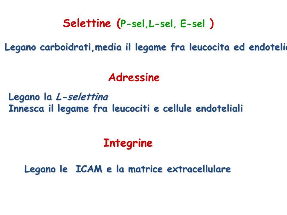 Selettine (P-sel,L-sel, E-sel )