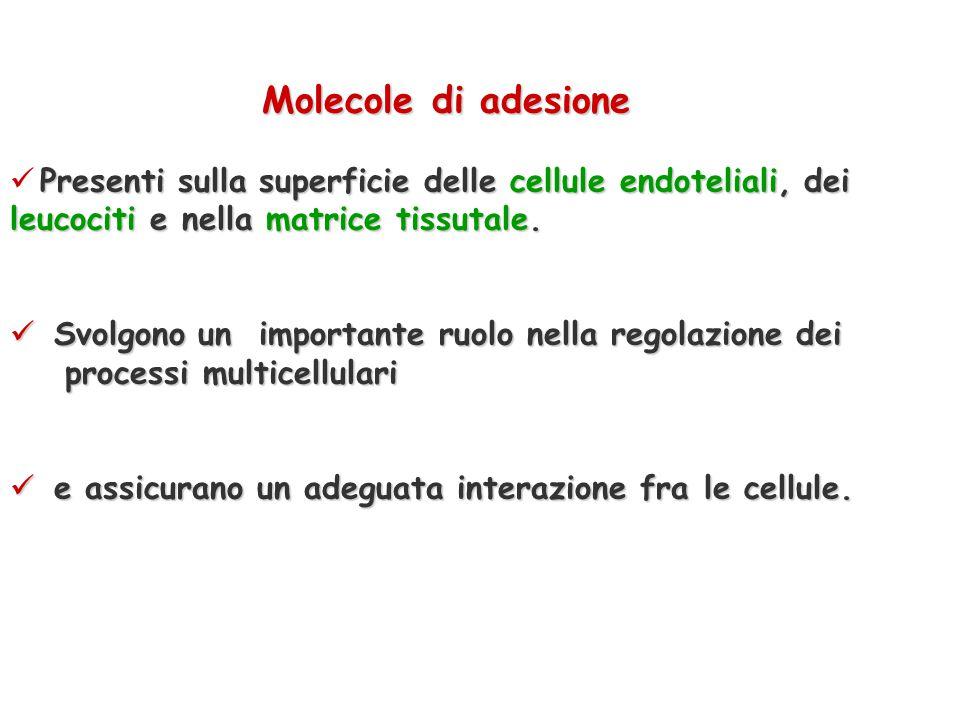Molecole di adesione Presenti sulla superficie delle cellule endoteliali, dei leucociti e nella matrice tissutale.