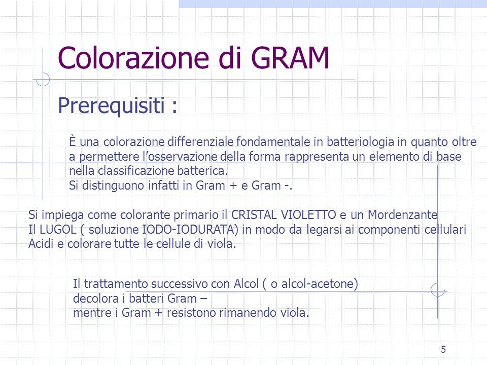 Colorazione di GRAM Prerequisiti :