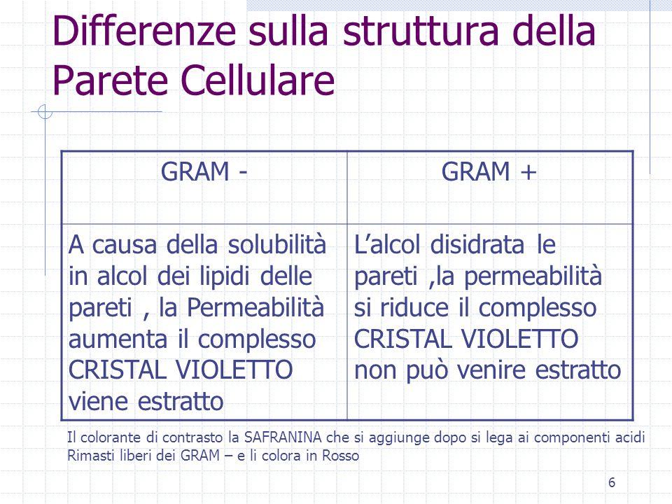 Differenze sulla struttura della Parete Cellulare