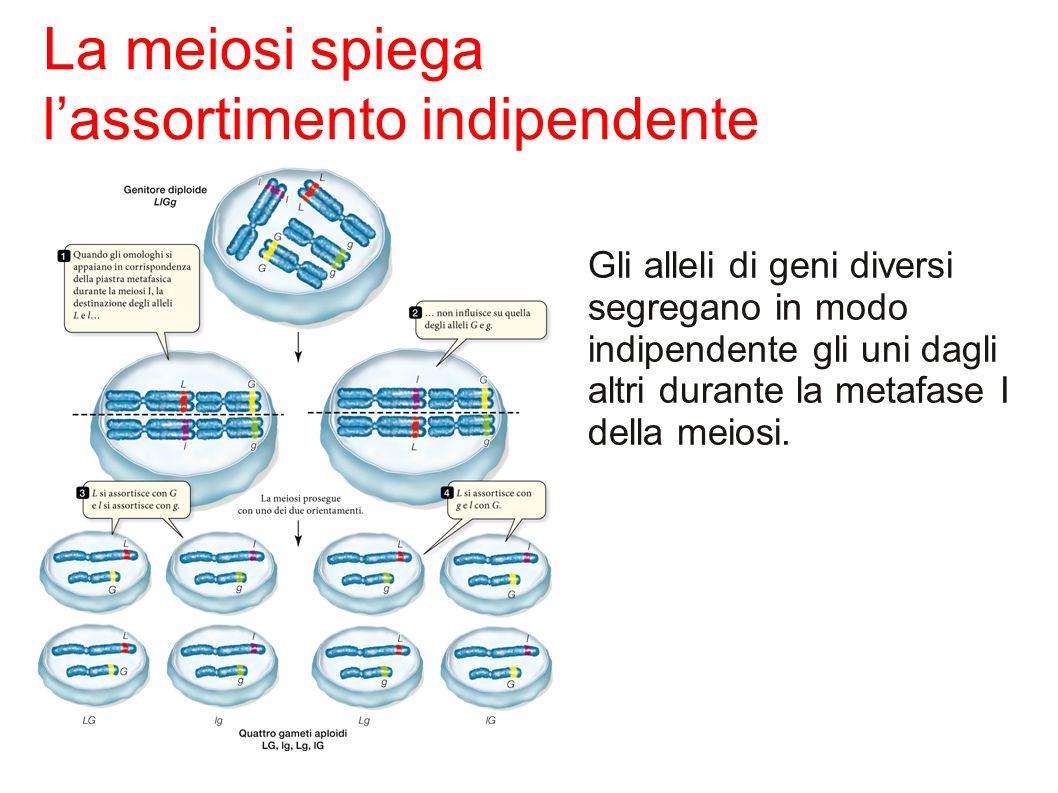 l'assortimento indipendente