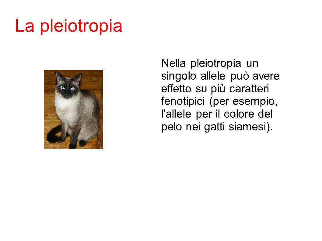 La pleiotropia