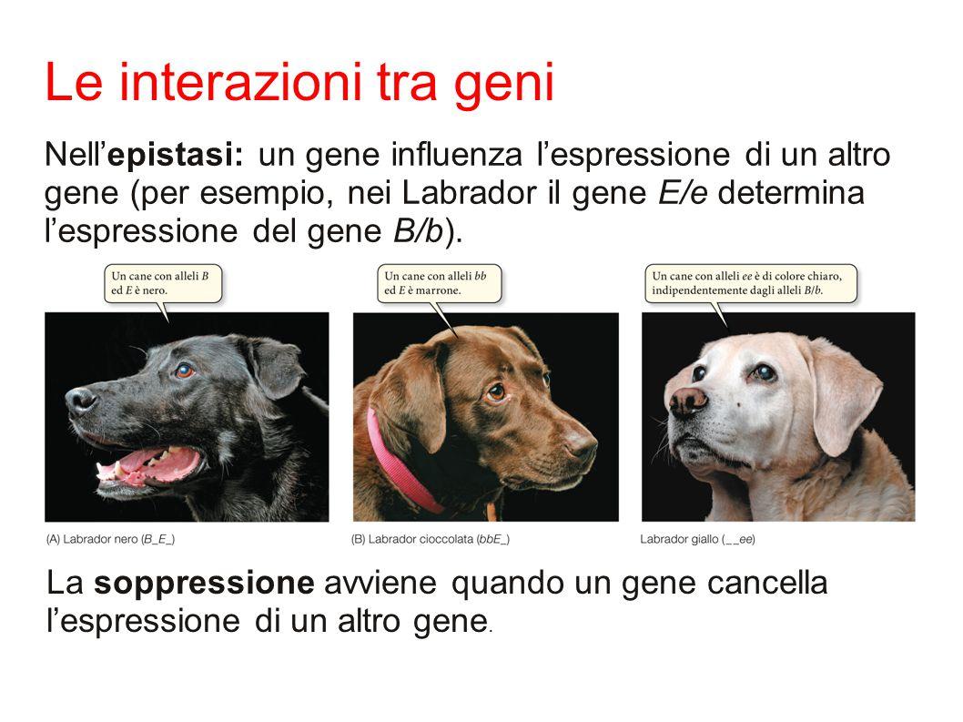 Le interazioni tra geni