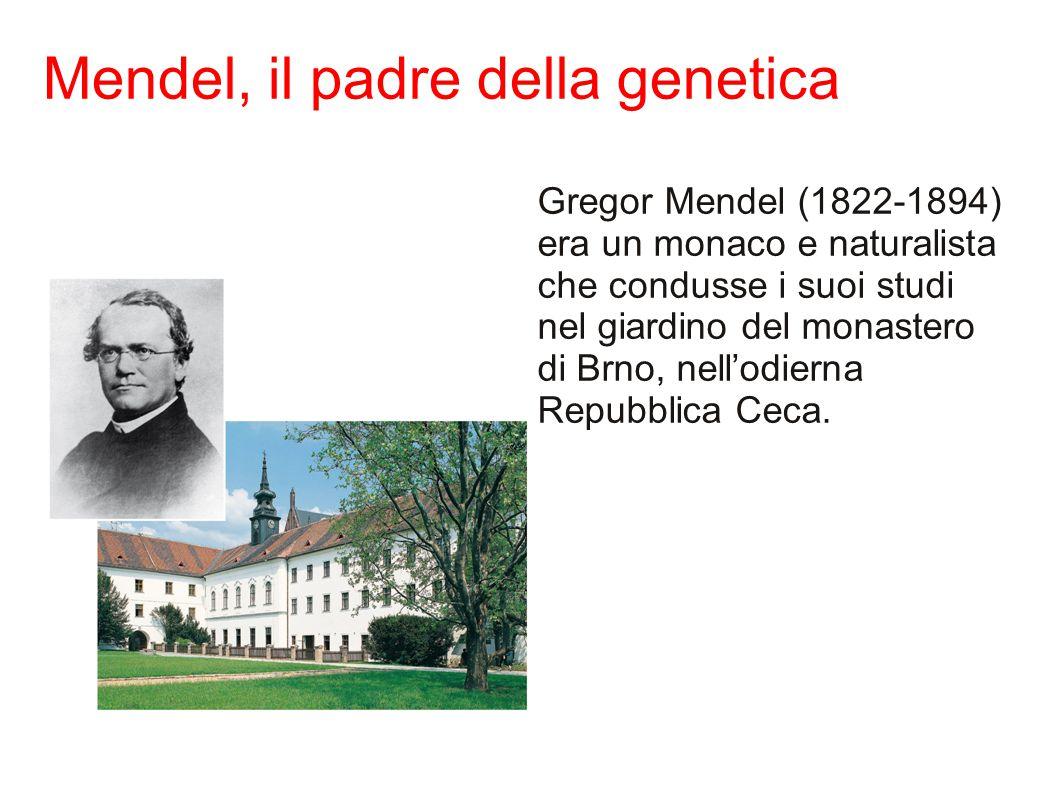 Mendel, il padre della genetica