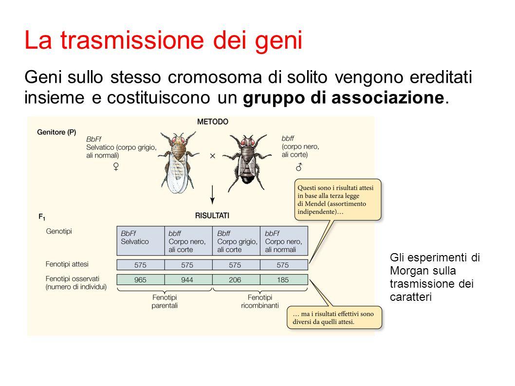 La trasmissione dei geni