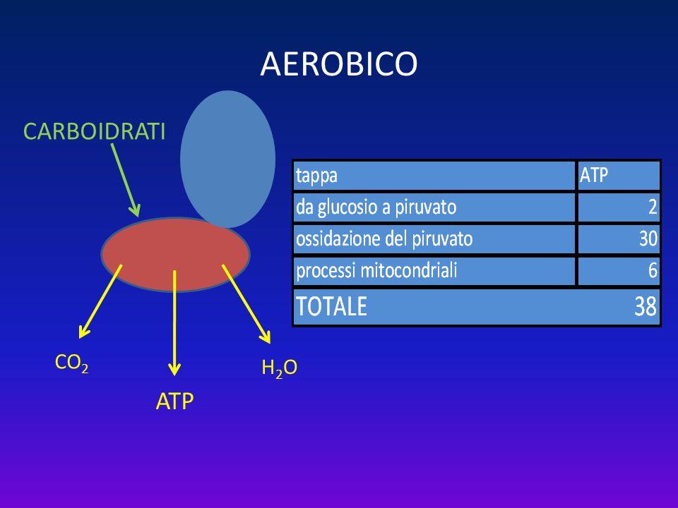 AEROBICO CARBOIDRATI LIPIDI CO2 H2O ATP