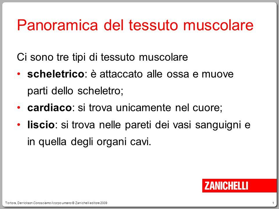 Panoramica del tessuto muscolare