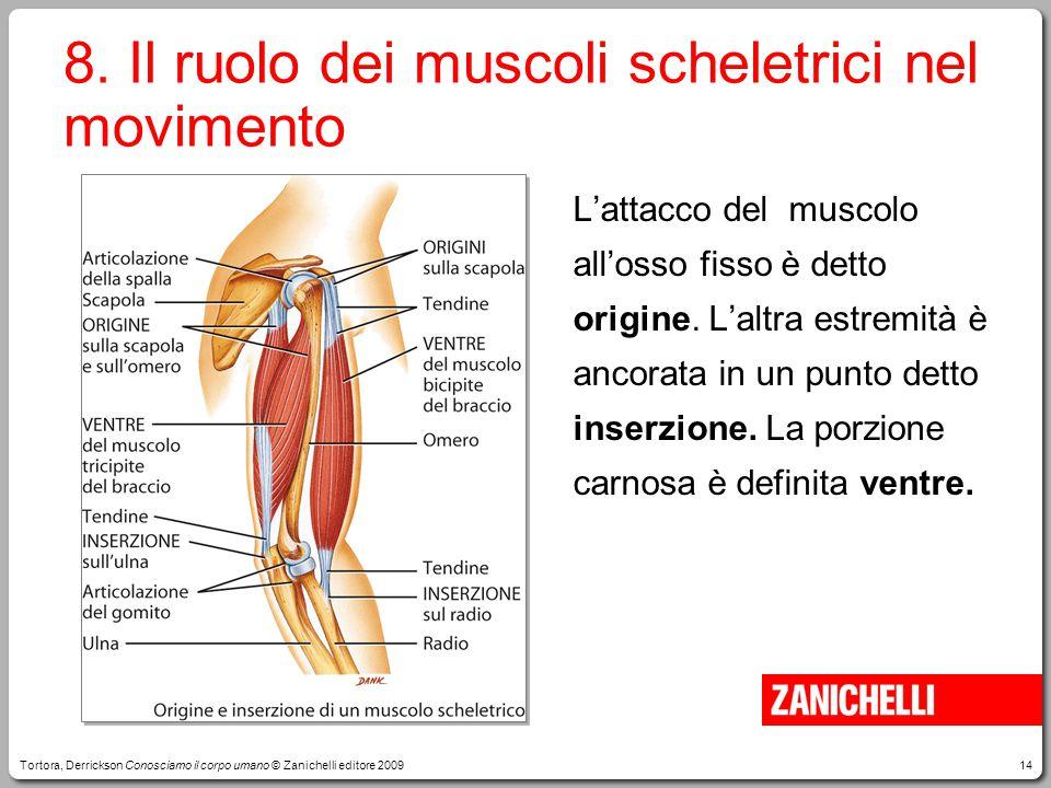 8. Il ruolo dei muscoli scheletrici nel movimento