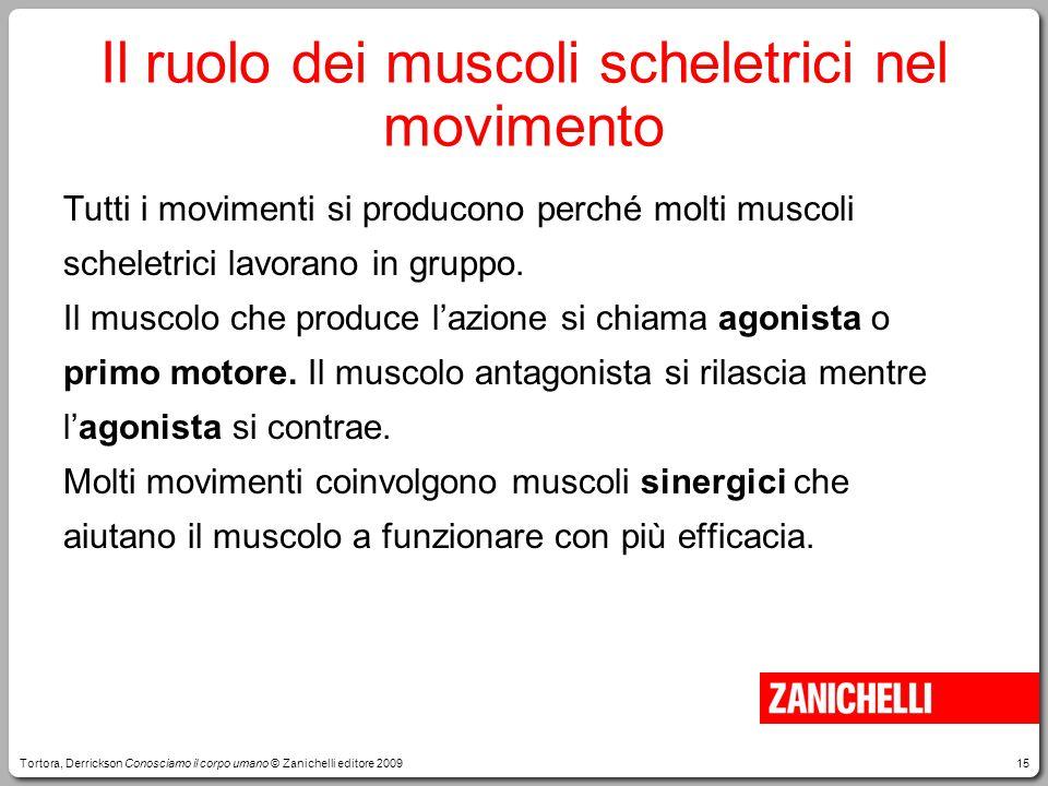 Il ruolo dei muscoli scheletrici nel movimento