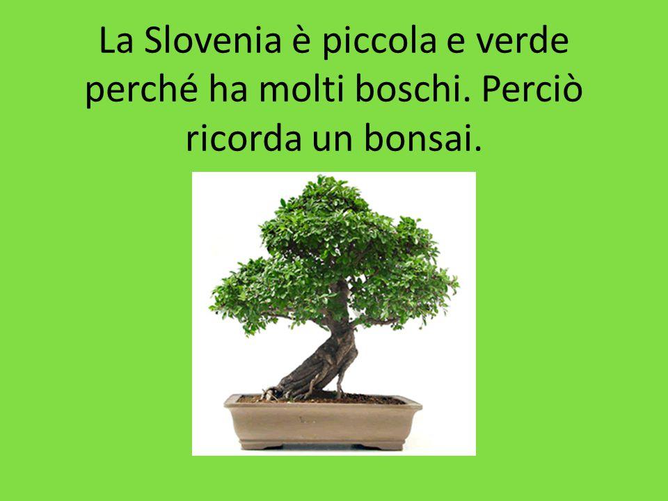 La Slovenia è piccola e verde perché ha molti boschi