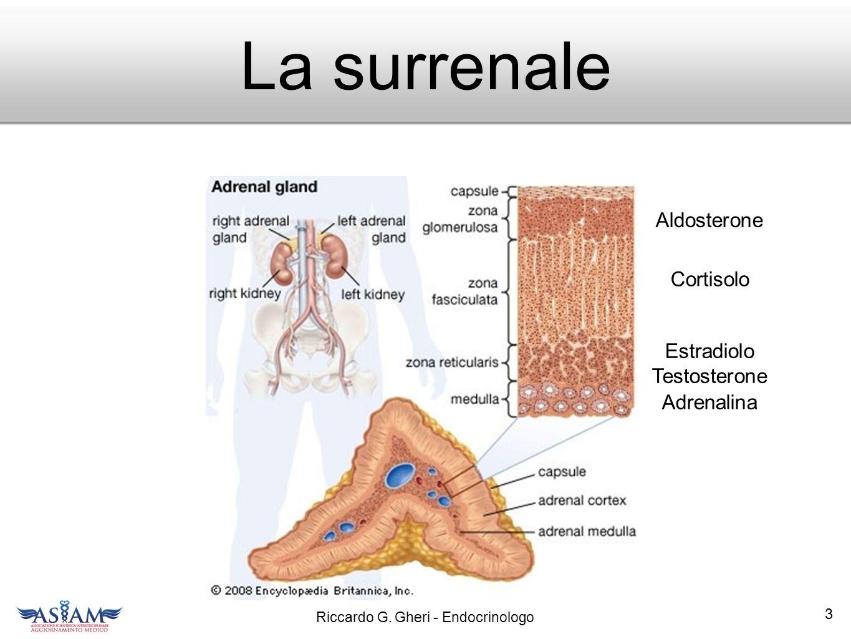 Estradiolo Testosterone